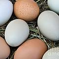 Chicken Eggs by Inga Spence