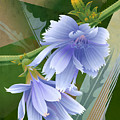 Chicory Cornflower Print by Garth Glazier