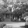 Chinese Garden by Yali Shi