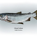 Chinook Salmon by Ralph Martens