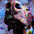 Chocolate Lab Nose by Roger Wedegis