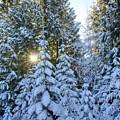 Christmas Morning by Idaho Scenic Images Linda Lantzy