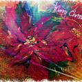 Christmas Star by Vesna Martinjak
