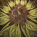 Chrysanthemum by Patricia Fatta