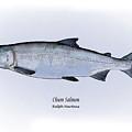 Chum Salmon by Ralph Martens