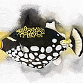 Clown Triggerfish No 01 by Maria Astedt