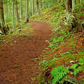 Coastal Trail by Idaho Scenic Images Linda Lantzy