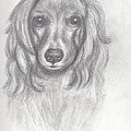 Cocker Spaniel by Judy Moses
