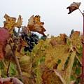 Colchagua Valley Vineyard  by Brett Winn
