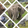 Collage Of Animals From Tanzania  by Mariusz Prusaczyk