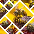 Collage Of Western Honey Bee by Mariusz Prusaczyk