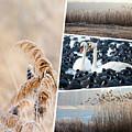 Collage Of Winter Grass by Mariusz Prusaczyk