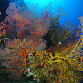 Colorful Assorted Sea Fans And Soft by Steve Jones