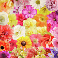 Colorful Floral Background by Svetlana Foote