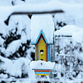 Colors In The Snow by Nicola Simeoni