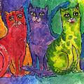 Colourful Cats by Angel Ciesniarska