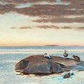 Common Eiders On A Rock by Mark Carlson