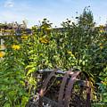 Community Garden by Brandon Smith