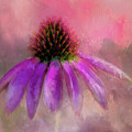 Coneflower Painted by Terry Davis