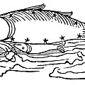 Constellation: Pisces by Granger