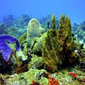 Coral Head by Bob Foudriat