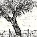 Cork Oak by Chani Demuijlder