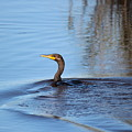 Cormorant In The Marsh by Paulette Thomas