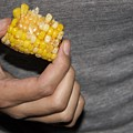 Corn by Molly Sider