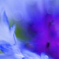 Cornflower by Silke Magino