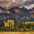Cottonwoods And Fir Trees Fall Color Grand Tetons National Park Wyoming by Dave Welling