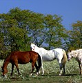 Country Horses by Jim  Darnall