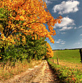 Country Road And Autumn Landscape by Michal Boubin