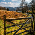 Countryside Gate by Adrian Evans