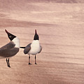 Courtship Dance Of The Laughing Gulls II by Leda Robertson