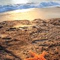 Crescent Bay Laguna Beach California by Utah Images