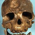 Cro-magnon Skull by Granger