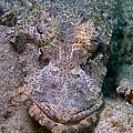 Crocodile Fish by Joerg Lingnau