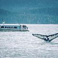 Cruise Ship Pier 91 In Seattle Washington by Alex Grichenko