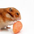 Curious Hamster 1 by Yedidya yos mizrachi