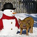 Curious Piglet And Snowman by Jean-Louis Klein & Marie-Luce Hubert