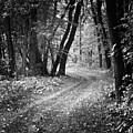 Curving Trail Entering Deciduous Forest by Donald  Erickson