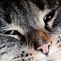 Cute Cat Close-up Portrait by Michal Bednarek