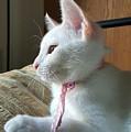 Cute Kitten by Yazid Ismail