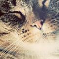 Cute Small Cat Portrait by Michal Bednarek