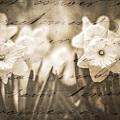 Daffodil Patch Sepia by Alissa Beth Photography