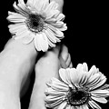 Daisy Toes by Diana Angstadt
