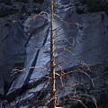 Dead Tree by Alexander Fedin