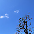 Dead Tree And Two Clouds by Mary Bedy