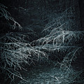 Deep In Woods by Svetlana Sewell