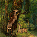 Deer In The Forest, 1868 by Gustave Courbet
